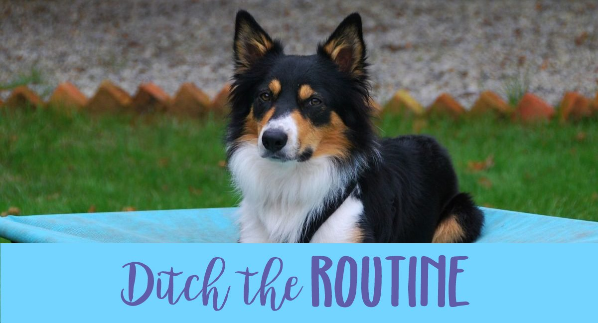 ditch the routine