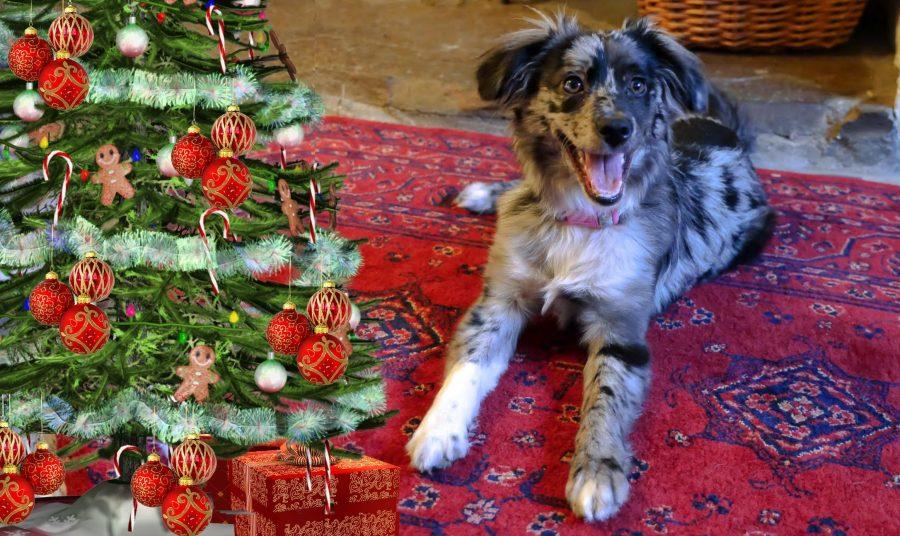 christmas leftovers