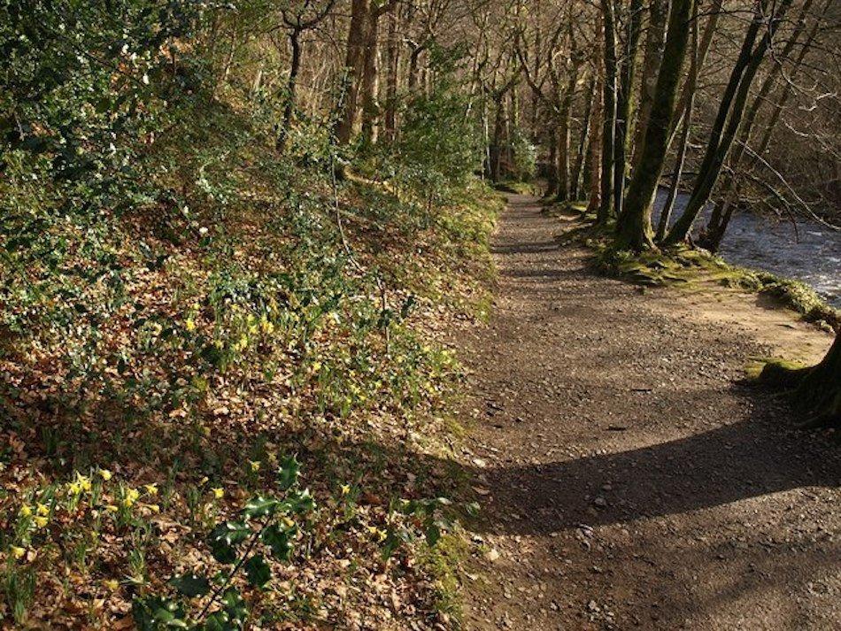 dunsford daffodil walk