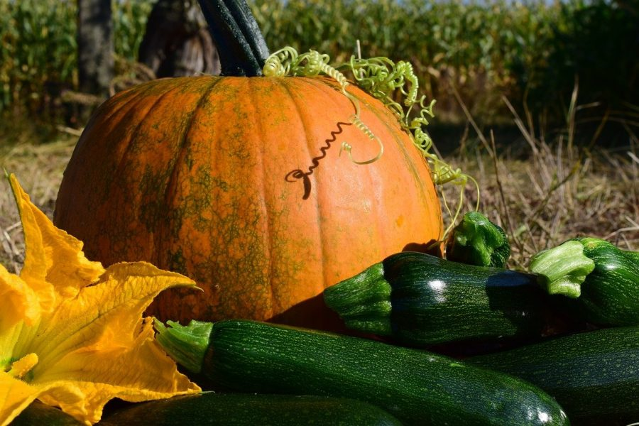 pumpkin courgette